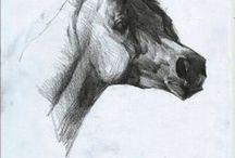 Drawings & photos