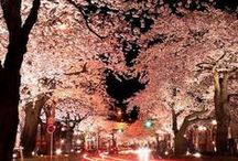 Night Sceneries / enchanting Places around the World - Night Sceneries