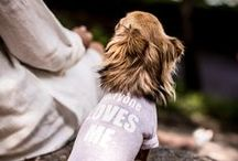 "FAYRI - Everyone Loves Me Dog Clothes T-shirt / Spoil your dog with ""Everyone Loves Me"" graphic baseball tee. It is made with soft snowy textured jersey fabric for comfort, softness, and flexibility."