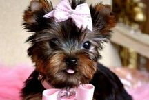 Bows for Dogs | Bows for Cats / by How to Make Bows