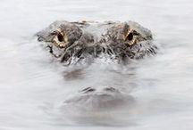 Wildlife » Photography