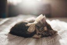 Adorable Pets » Animals