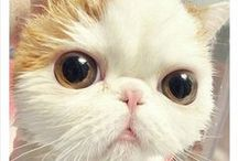 Cats / Cats are so Cute ;)
