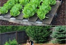 Gardening: Vegetable bed ideas