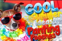 Summer Hot Dogs / Keep your Pooches cool in the scorching hot summer!