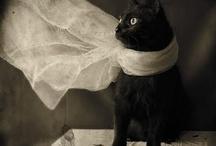 Black Cat Beauties!!