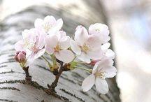 h a p p y  s p r i n g / Love Spring..
