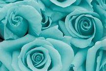 Robin Eggshell Blue!!!