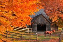 Farms and farm miscellaneous :)