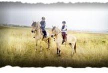 Horseland Club / Horseland reprezintă calea ta spre o comuniune perfectă cu natura și cu un animal pe care îl adori.