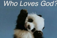 pandas and bears / cute cuddly fun page  / by philip spencer