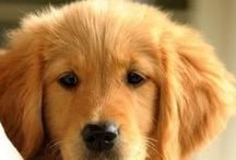 Dog Days / Pets