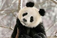 Animals / Pinned animal images.