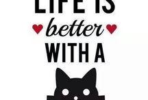 Cats #Meow!