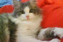 Zwierzęta domowe,Pets / najbardziej lubiane