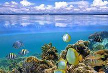 Morskie Królestwo: Gatunki ryb i muszli (Marine Kingdom: Species of fish and shells / Morskie Królestwo: Gatunki ryb i muszli((Marine  Kingdom: Species of fish and shells  )  Fauna and flora  )