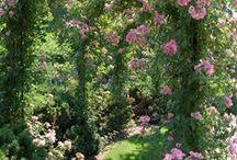 Plantas e ornamentação para jardins / plantas, jardins, floreiras, vasos, cercas, jogos e brincadeiras para adultos e crianças, fontes e lagos, casinhas para jardins, infantis e casa de árvore,balanços e pérgolas e treliças para escalar rosas.