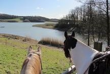 Horsey Holidays / Follow the fabulous trails around Hoe Grange - the view is always better on horseback!