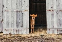 Farm Animals / The pigs, horses, cows, donkeys, dogs, cats, and--of course--goats that make our farms work.