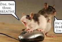 Need a Good laugh? / by victoria hamilton