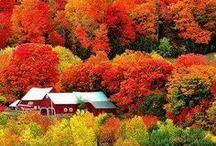 Fall / Herbst