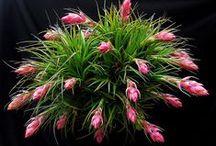Beautiful Succulents, Cacti & Rare Plants / by Chandra Knoke