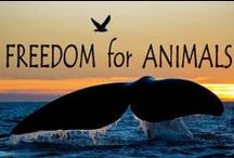 Animal Causes / Causes, Non-profits, infographics and info about animal causes we care about.