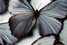 borboletascolibris / Cores e fantasia