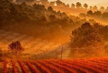 ⊰ Wine and Cheese ⊱ / In Vino Veritas