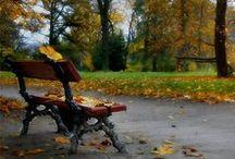 Seasons.. / Spring, Summer, Fall & Winter