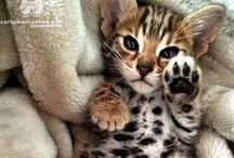 ! ✔LOOK AT THOSE CUTE PAWS! / I Think ALL ANIMAL PAWS Are The Most ADORABLE!!     PLEASE Pin ANY ANIMAL With PAWS or Even FEET.  BE CREATIVE!   SHORTEN  DESCRIPTIONS!  GOOD QUALITY and ONLY A FEW SMALL PICS.  Enjoy!!