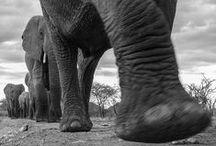 ANIMAL KINGDOM / Elephants