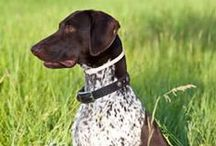 Hunting Dog Names / The hunting dog names list includes some of my favorite names for your gun dog, pointer, flusher, retriever and more.