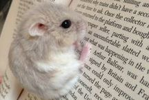 Hamster is my live