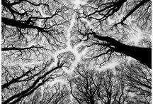 N A T U R E • T R E E S / Trees of all shapes and sizes