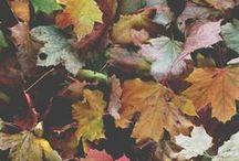 Autumn / by Sophie Zalokar