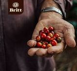 The Coffee Journey / From the plantation to your cup.