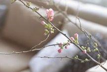 Favoriete Lente Artikelen / De mooiste lente artikelen voor dit najaar! Doe ook mee met de Pin & Win actie: 1. Ga naar Homecenter.nl en kies je favoriete lente-artikel(en). 2. Pin dit op je eigen Pinterest account met de #homecenterlente en vertel waarom dit jouw favoriete artikel is. 3. Volg Home Center op Pinterest. 4. Zorg ervoor dat jouw foto gepind en geliked wordt.  Je kunt zo vaak meedoen, als jezelf wilt!  Je maakt 3x kans op je favoriete lente-artikel!