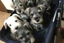 Hello puppy /