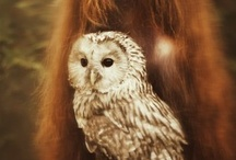 Owls / by Claire Des Bruyeres
