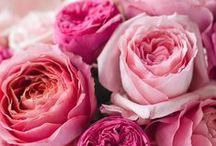 Flowers / Virágok
