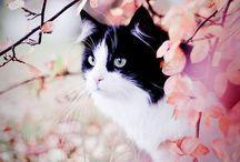 Photography: Beautiful Captures / :)
