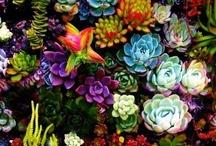 Flora + Fauna / by Jenna! Osborne