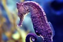 Oceanlife/Sea Creatures