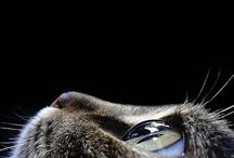 Cats / by C Landeros