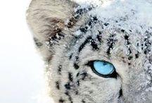Animals - Wild cat