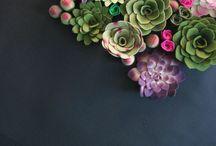 Plants|Flowers|Gardens