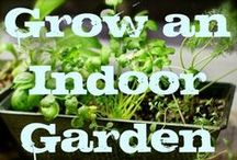 Urban Gardening /  I live in the city but I also like fresh home grown veggies. Here are some tips and tricks on how to be frugal and grow your own veggies.
