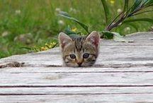 Animals - cats / Cat, cat & cat!