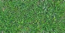 Grass Textures seamless / royalty-free professional grass textures  seamless for architectural 3d visualization and all CG artist